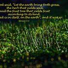Genesis 1:11 (day 10) by tonysphotospot