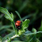 Little Lady Bug by Karen Harrison