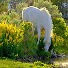 For The Love Of Wild Horses  by Jeanne  Nations