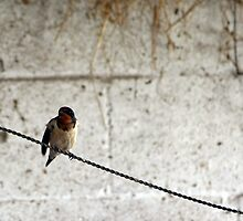 Bird On Wire. by Alison Bur