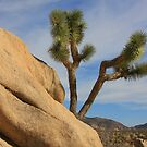 Joshua Tree National Monument by CarolM