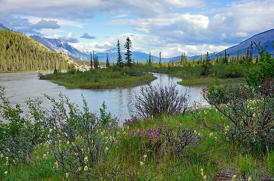 Athabasca River, Alberta by Harry Oldmeadow