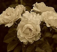 Antique Roses by Monnie Ryan