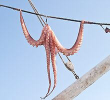 Caught Octopus Hanging Outside by GysWorks