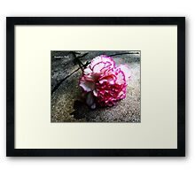 Pink Carnation No. 1# Framed Print