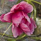 """Rose"" by Bruce Jones"