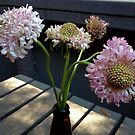 Pink Scabiosa by Barbara Wyeth