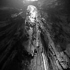 Skelton of a Gaint by MissMimi63