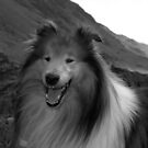 Rough Collie by Lou Wilson
