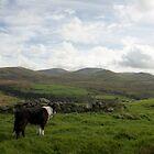 The beauty of Llanfairfechan by Michael Haslam