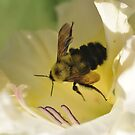 Bumble Bee in Gladiolos Heaven by Wviolet28