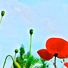 poppies in the sky by annet goetheer