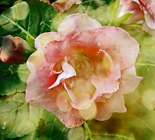 Rose Begonia In Pink by MotherNature2