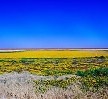 Field of Yellow Mellow by Shyll