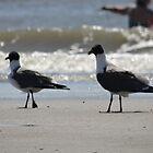 Gull 2: Revenge of Gull by Taters