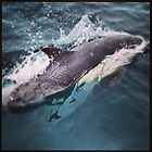 Dolphin by photosbyamy