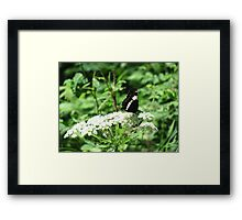 nipped Admiral soldiers on Framed Print