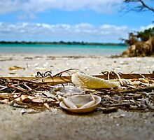 Sea Shells, Seven Mile Beach  by Sammy-Joy