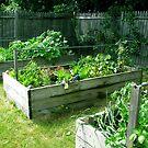 My veg garden 3/5 done. by evon ski