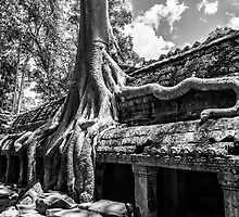 The Trees of Ta Prohm by Karen Willshaw