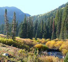 High Meadow Stream at Dawn by BrianAShaw