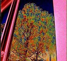 Window Tree IV by taudalpoi