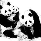 Giant Panda (Ailuropoda melanoleuca) (Panda family) by Terry Bailey