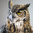 Great Horned Owl in Repose by Bryan Shane