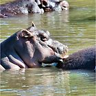 I JUST LOVE MY MOM! *Hippopotamus amphibious* SEEKOEI  by Magaret Meintjes