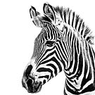 Black & White Stripes by Mark Hughes