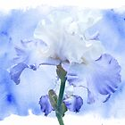 True Blue - Bearded Iris by MotherNature2