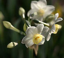 Jonquils in Bloom by Joy Watson