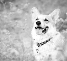 :Corgi Smiles: by kmkmonkay