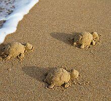 Three Baby Turtles - Wanda Beach - Sydney by Bryan Freeman