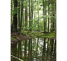 Forest Pond Reflections Photographic Print