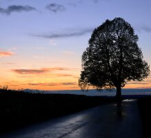 The Lime Tree by Kasia-D