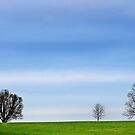 Five Trees by cclaude