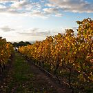 In the Vines by Fiona Kersey