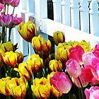 Tulipalooza by wandringeye