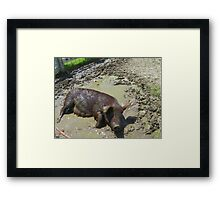 Happier Than a Pig in Mud Framed Print