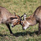 Antelope Games by MunschkinMedia