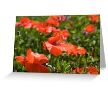 Poppies Compton Berkshire  Greeting Card