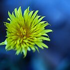 Dandilion Burst by Samsticks