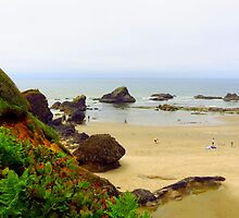 Fun On The Pacific Coast...Near Seal Beach, Oregon by trueblvr