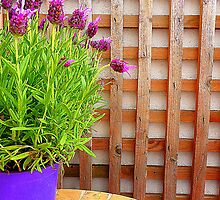 Butterfly Lavender by Fara