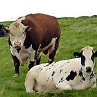Bull by Kat Simmons