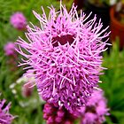Pink Pincushion by Shulie1