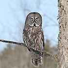 Perching perfect by Heather King