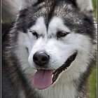 Dog Portrait by Wolf Sverak