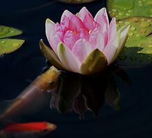 Water Lily Friends ! by Doug Norkum
